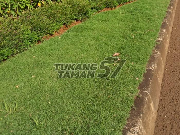 jual rumput taman sukabumi