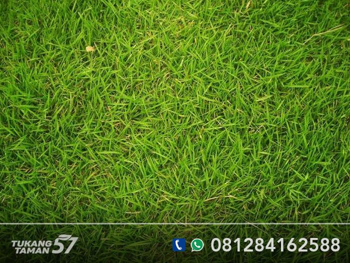 jual rumput taman sentul
